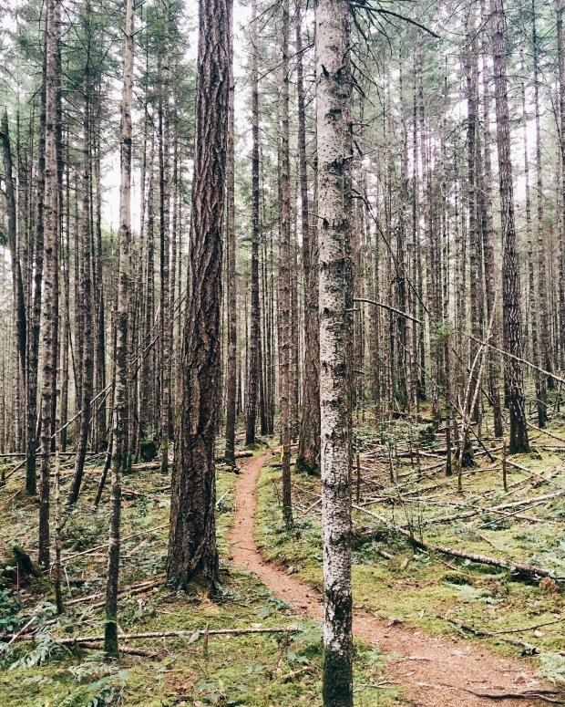 Hiking Mount Benson